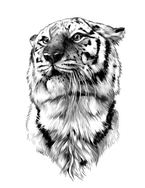 tiger head – artystyczna grafika wektorowa