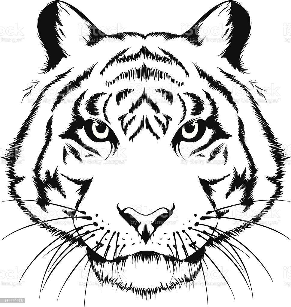 Tiger head royalty-free tiger head stock vector art & more images of aggression