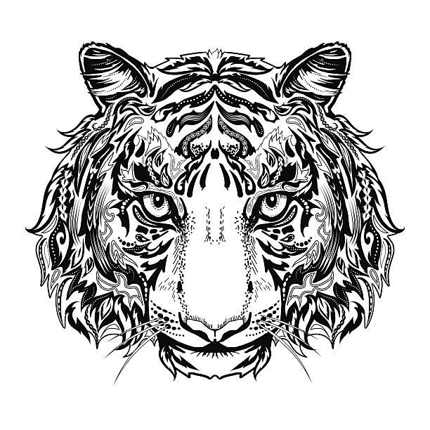 Ausmalbilder Tiger Vektorgrafiken Und Illustrationen Istock