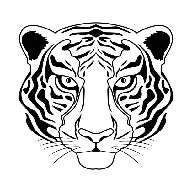 Best Black And White Tiger Illustrations, Royalty-Free ...