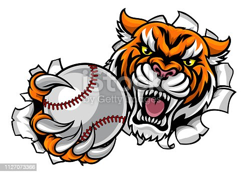 A Tiger angry animal sports mascot holding a baseball ball and breaking through the background with its claws