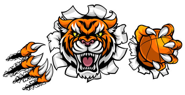 Tiger Holding Basketball Ball Breaking Background A Tiger angry animal sports mascot holding a basketball ball and breaking through the background with its claws mascot stock illustrations