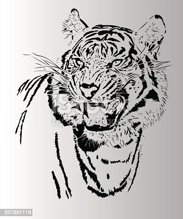 Tiger illustration in black lines