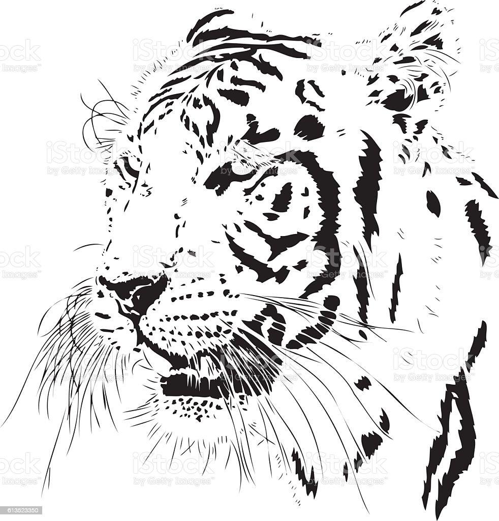 Tiger illustration lateral view vector art illustration