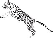 Jumping Tiger illustration in black lines