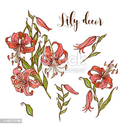 Tiger Lily flower set for your design.
