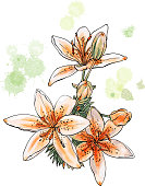 Watercolor  flowers isolated on a white background. Tiger lily. Vector illustration