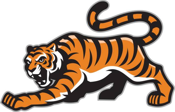 tiger mascot - high school sports stock illustrations