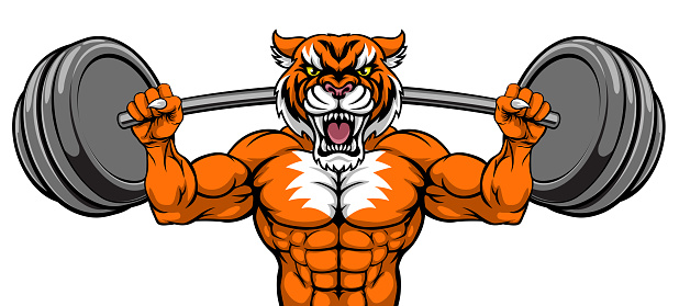 Tiger Mascot Weight Lifting Barbell Body Builder