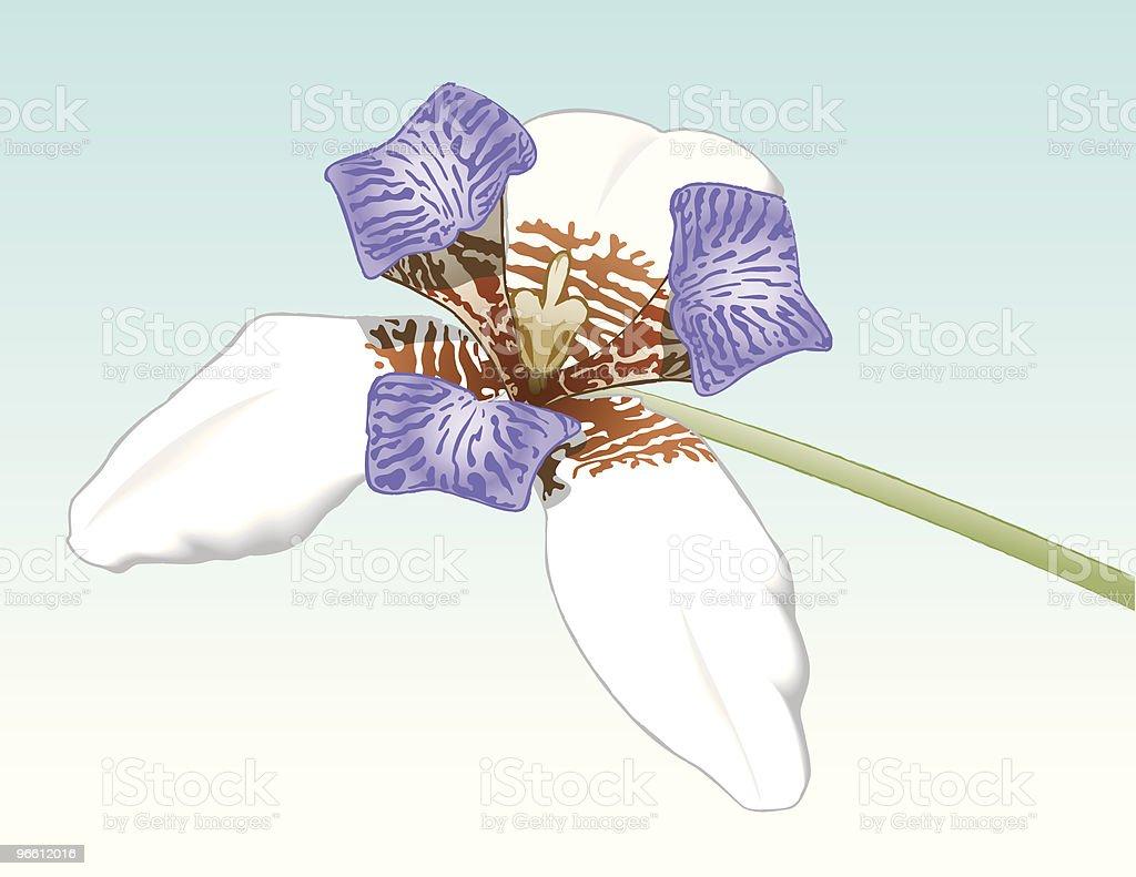 Tiger Orchid - Royaltyfri Blomkorg - Blomdel vektorgrafik
