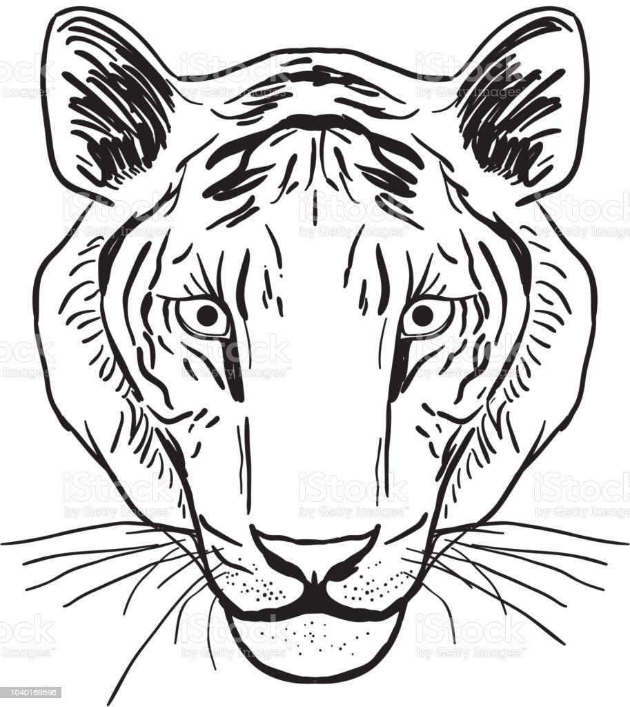 Tigerportrait Skizze Kopf Zeichnen Schwarze Kontur Auf Weißem