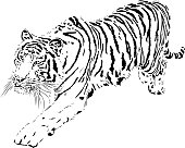 Tiger portrait in black and white lines illustration - Bengal tiger running and jumping