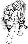 Tiger portrait in black and white lines illustration - Bengal tiger