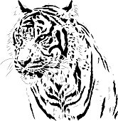 Tiger portrait in black and white lines illustration - Sumatran female tiger