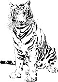 Tiger portrait in black and white lines illustration - Bengal tiger