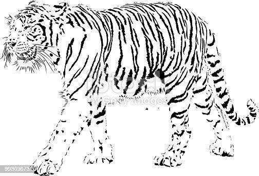Tiger portrait in black lines