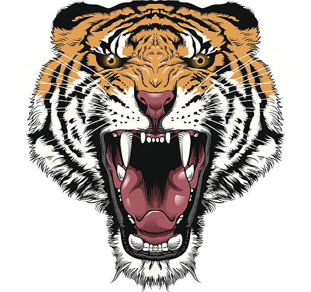 stockillustraties, clipart, cartoons en iconen met tiger roar - kat