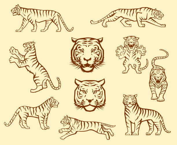 stockillustraties, clipart, cartoons en iconen met tijger set - tijger