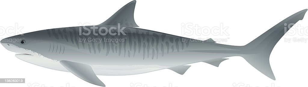 Tiger Shark vector art illustration