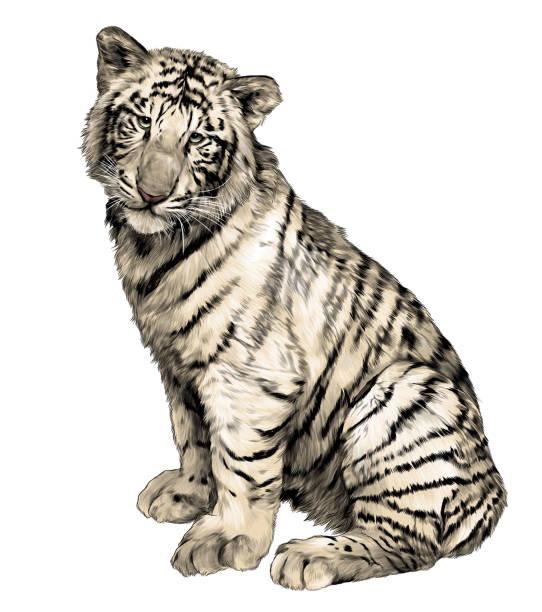 tiger sitting full length – artystyczna grafika wektorowa