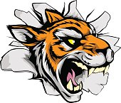 A tiger sports mascot or character breaking out of the background or wall