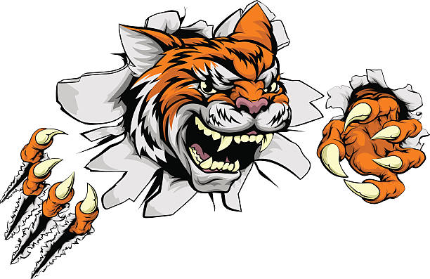 Tiger sports mascot ripping through wall vector art illustration