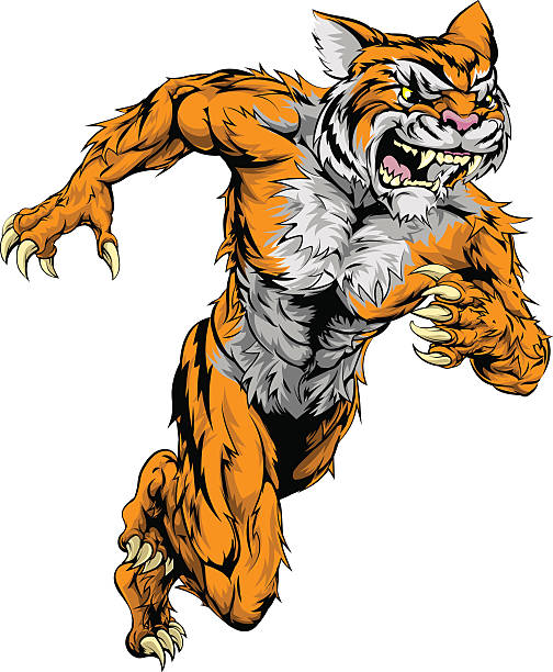 Tiger sports mascot running vector art illustration