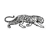 istock Tiger 1003196750