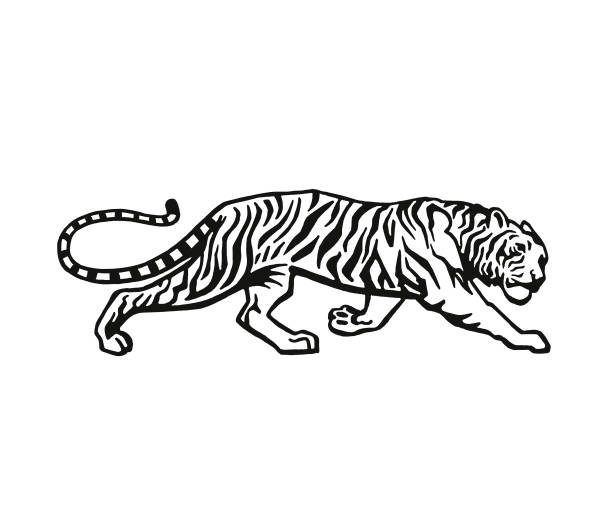 stockillustraties, clipart, cartoons en iconen met tijger - tijger