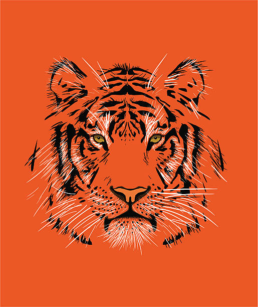 tiger - tiger stock illustrations, clip art, cartoons, & icons