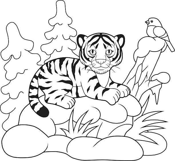 ausmalbilder tiger stockvektoren und grafiken  istock