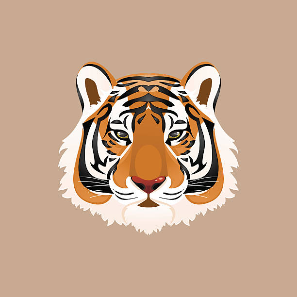 illustrations, cliparts, dessins animés et icônes de tigre. illustration vectorielle - tigre blanc