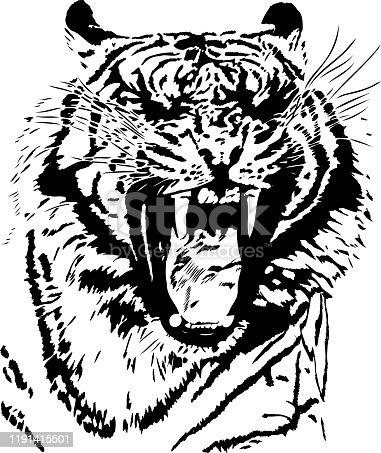 Tiger yawn in black lines
