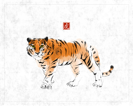 tiger210803Tiger, symbol of the chinese new year 2022, hand drawn with ink on rice paper background. Traditional oriental ink painting sumi-e, u-sin, go-hua. Hieroglyph - tiger.
