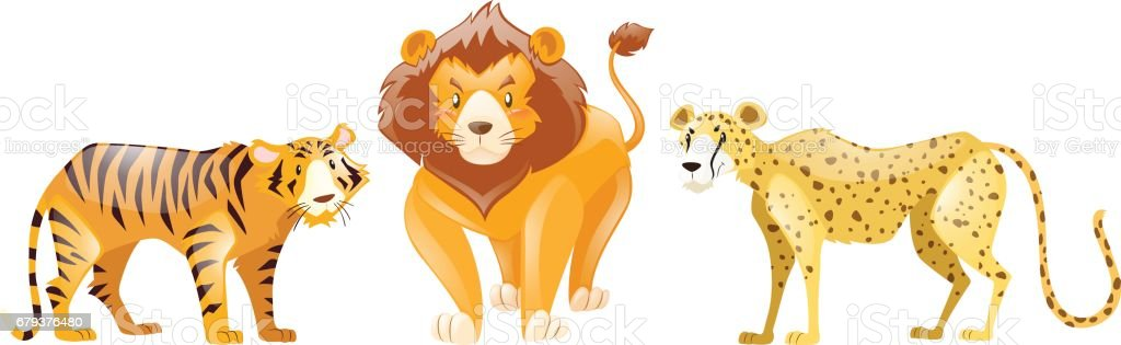 Tigers and lion on white background royalty-free tigers and lion on white background stock vector art & more images of animal