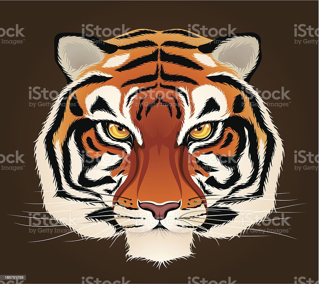 Tiger's Head royalty-free tigers head stock vector art & more images of animal