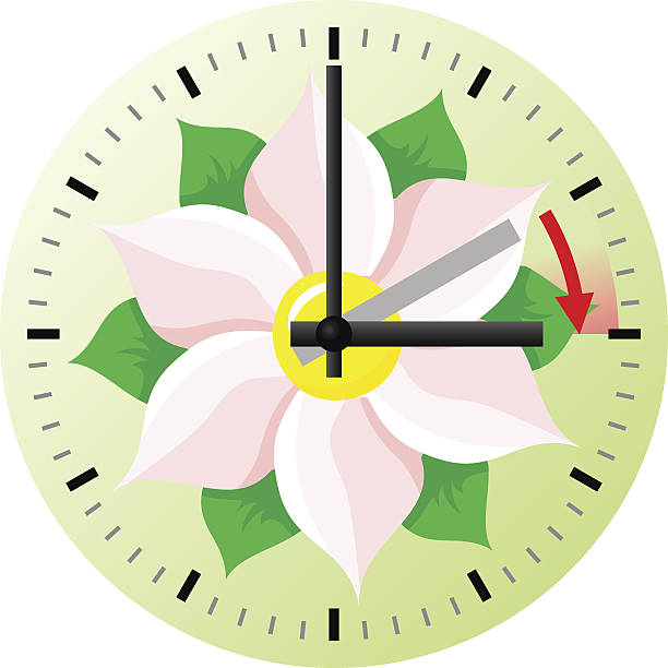time change to daylight saving time - daylight savings time stock illustrations, clip art, cartoons, & icons