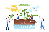 istock Tiny Scientists at Photosynthesis Infographics Presenting Changes Sunlight Into Chemical Energy, Splits Water to Oxygen 1326987390