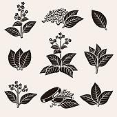 Tobacco leaf set. Vector