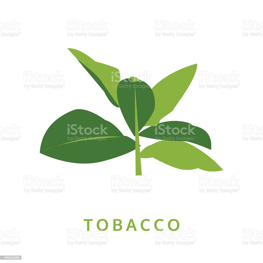 tobacco leaves, green plant vector illustration, isolated vector art illustration