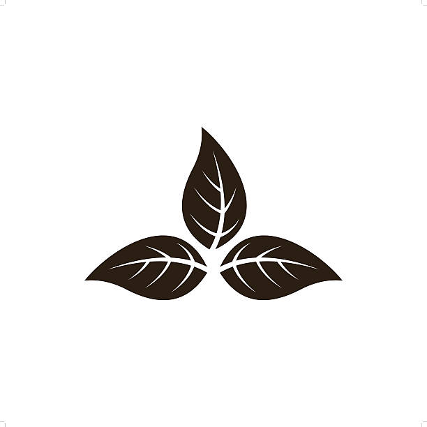 Tobacco Leaf Illustrations , Royalty-Free Vector Graphics