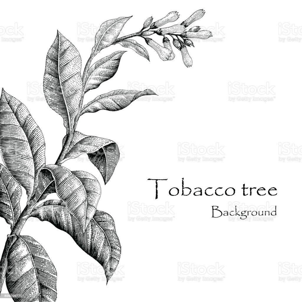main darbre tabac dessin style vintage fond darbre du tabac