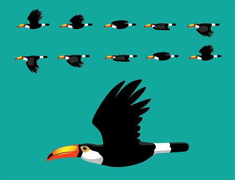 Toco Toucan Flying Animation Cute Cartoon Vector Illustration