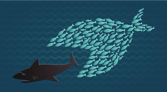 Together we stand: Little Fish eats Big Shark