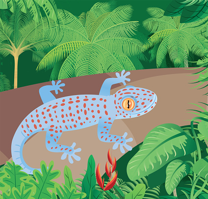 Tokay Gecko and tropical forest