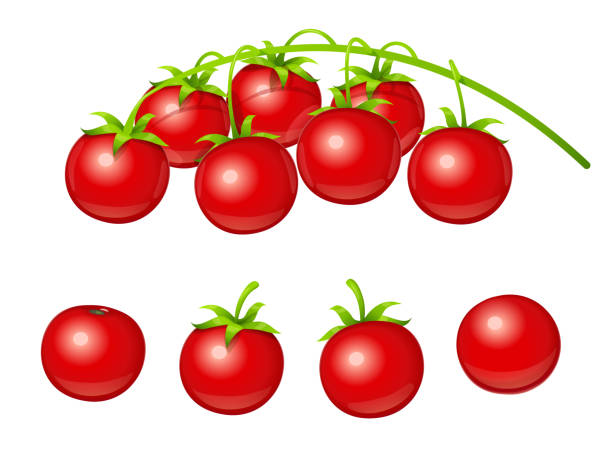 tomato cherry. set of fresh vegetable at branch. vector illustration. - cherry tomato stock illustrations