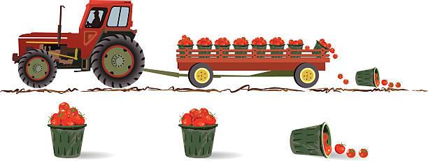 bildbanksillustrationer, clip art samt tecknat material och ikoner med tomato harvest - traktor pulling
