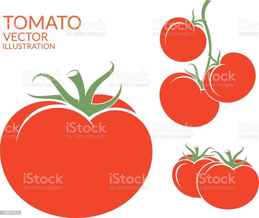Tomato. Isolated vegetables on white background vector art illustration