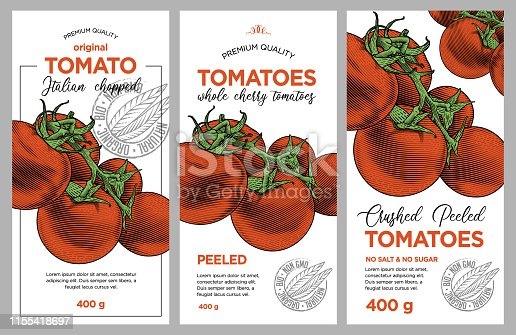 Vector hand drawn illustration of ripe tomatoes in engraving technique. Stylish vintage templates for tomato sauce packaging.