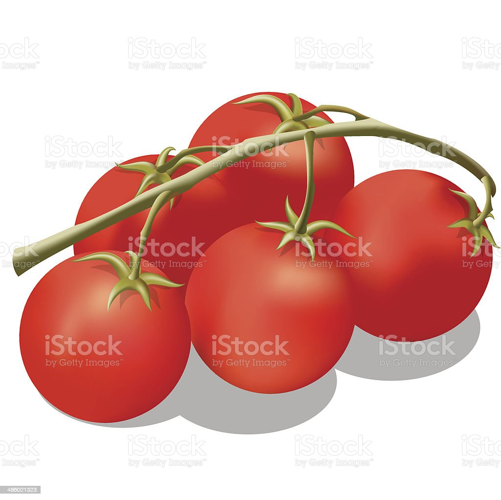 Tomato on a branch. royalty-free stock vector art